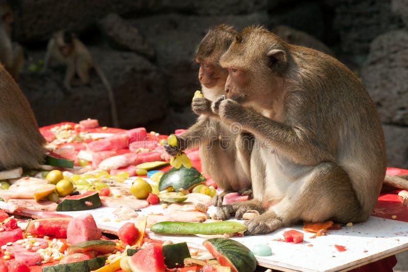 Partido do macaco de Tailândia (bufete do macaco de Tailândia) fotos de stock royalty free