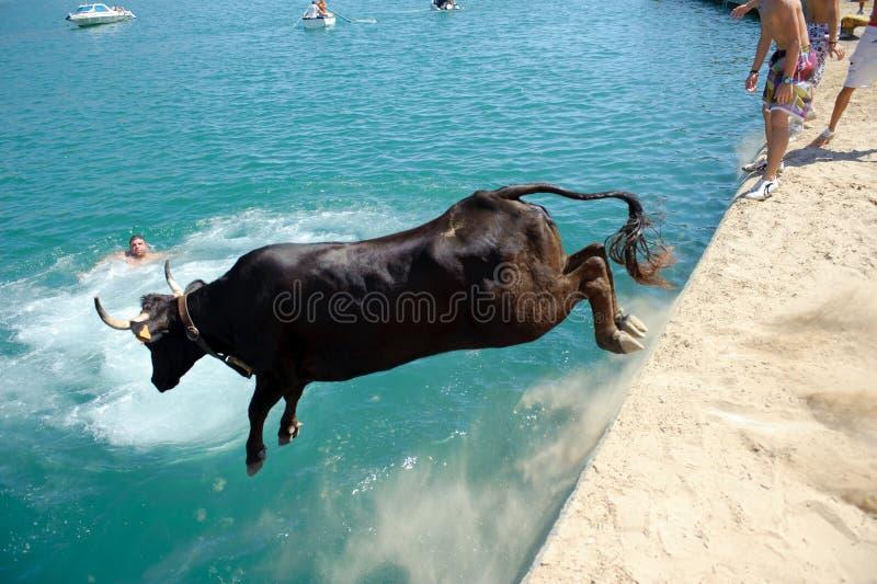Partido tradicional en Javea, España del toro fotografía de archivo