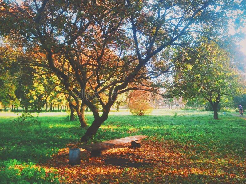 Download Partie à l'automne image stock. Image du arbre, bench - 45357097
