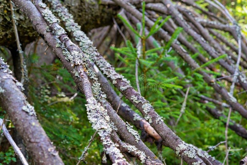 Partie abstraite d'un vieil arbre images stock