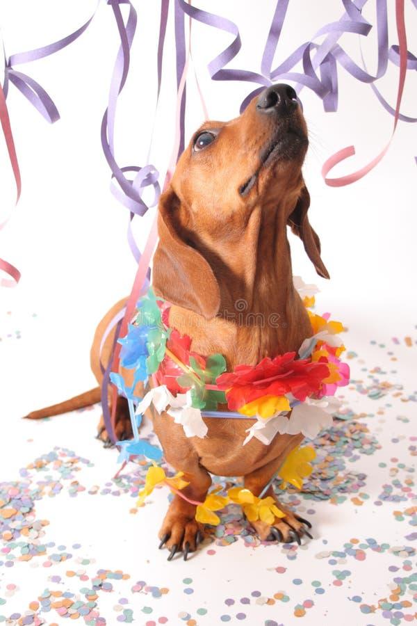 Partie de chien de carnaval photo libre de droits