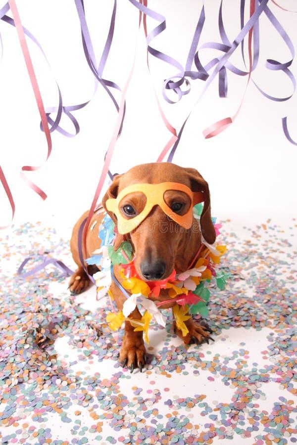 Partie de chien de carnaval photographie stock libre de droits