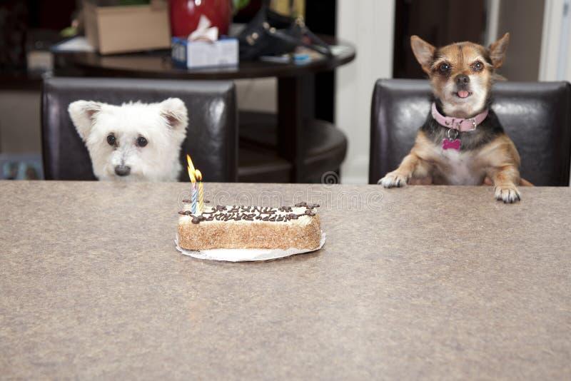 Partie de gâteau d'anniversaire de chien image stock
