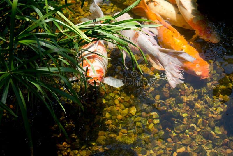 Partie de poissons photos stock