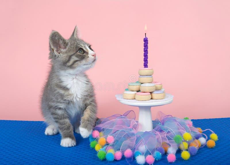 Partie tigrée de gâteau de beignet de joyeux anniversaire de chaton images libres de droits