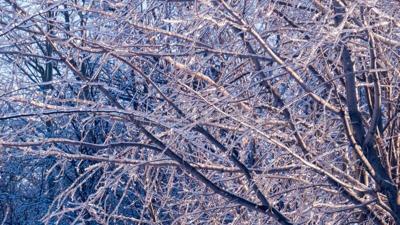 Partij van boomtakken met ijs worden behandeld dat stock afbeelding