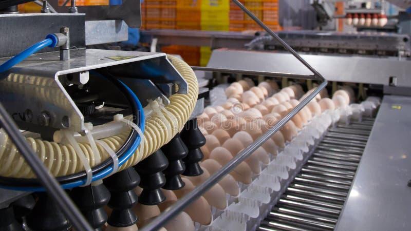 Partij van eieren op dienblad, Eizaken & Laagproces royalty-vrije stock afbeelding
