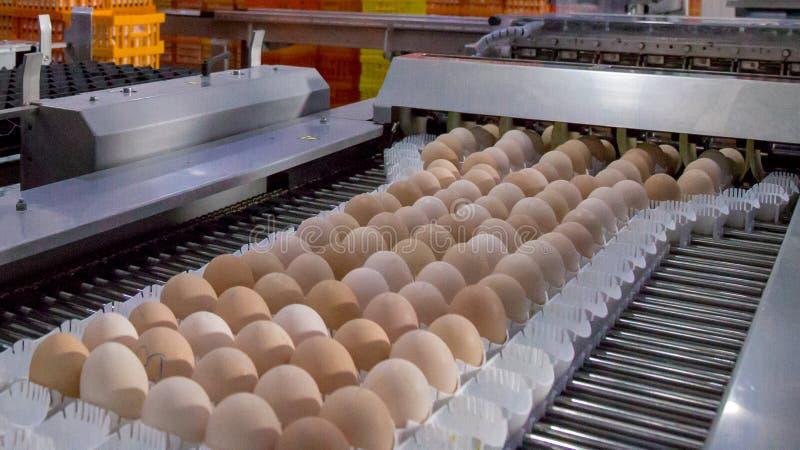 Partij van eieren op dienblad, Eizaken & Laagproces royalty-vrije stock foto