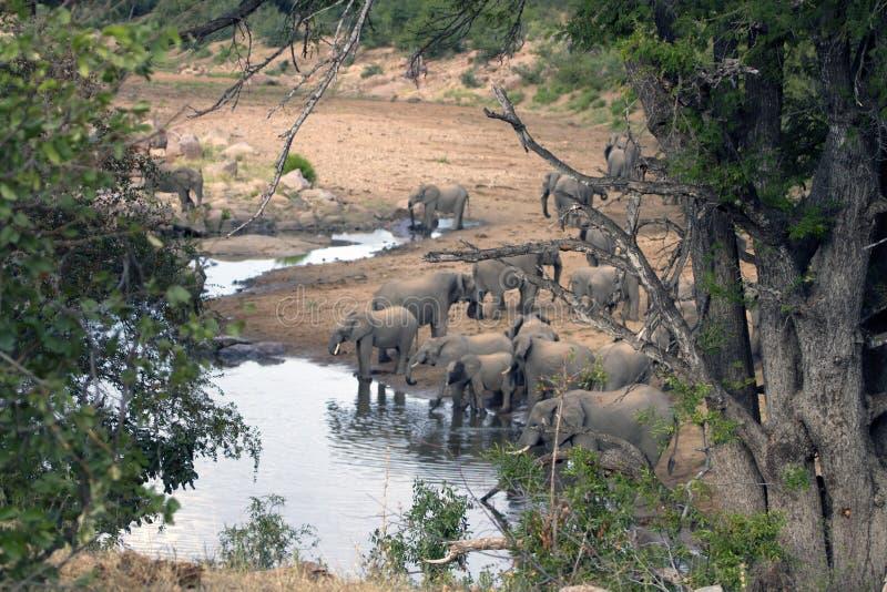 Partij van zich het Afrikaanse olifanten verzamelen royalty-vrije stock afbeeldingen