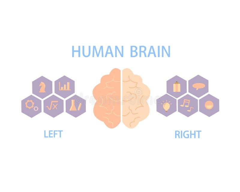 Partilha do cérebro humano em hemisférios esquerdos e direitos para o controle do corpo e do comportamento ilustração do vetor