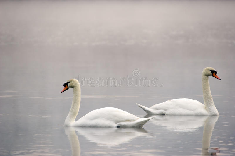 Download Parting Ways stock image. Image of birds, reflection - 31263369