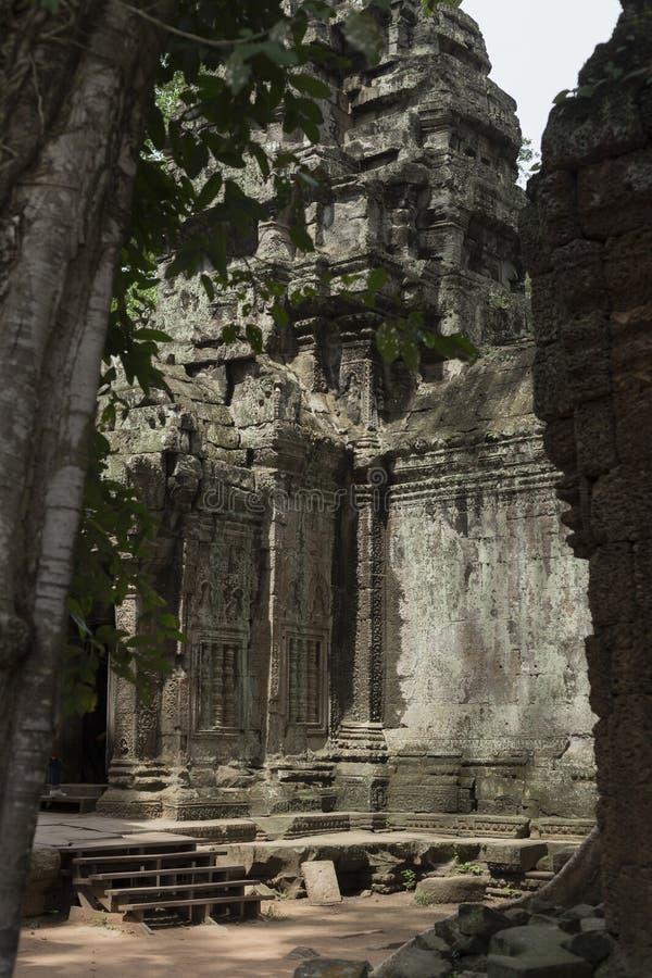 Partisk sikt av ett stag på templet för Ta Prohm i Angkor arkivbild