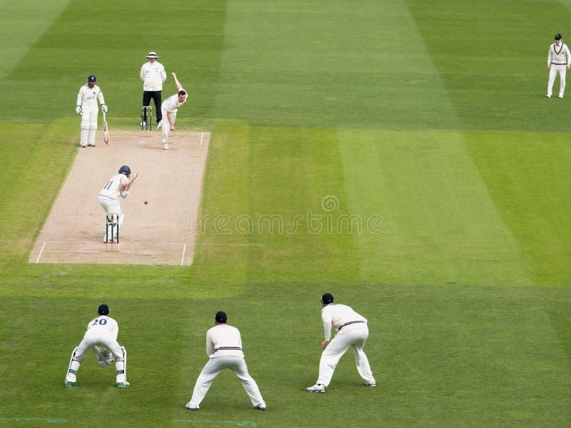 Partita professionale del cricket immagini stock