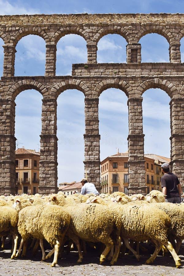 Partito della valletta a Segovia, passaggio delle pecore dall'aquedotto di Segovia in Spagna Tradizioni ed abitudini immagine stock