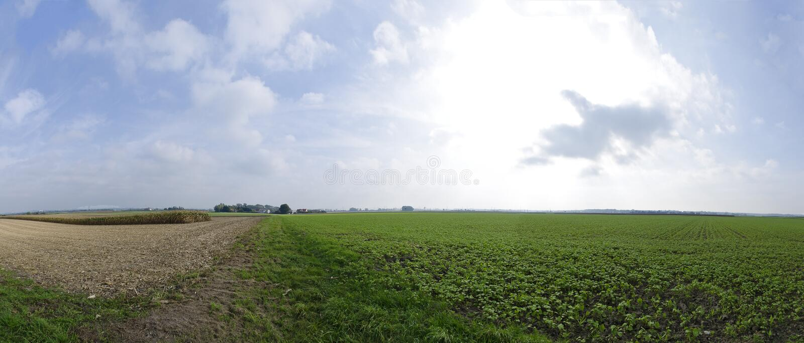 Partly harvested fields until the horizon stock image