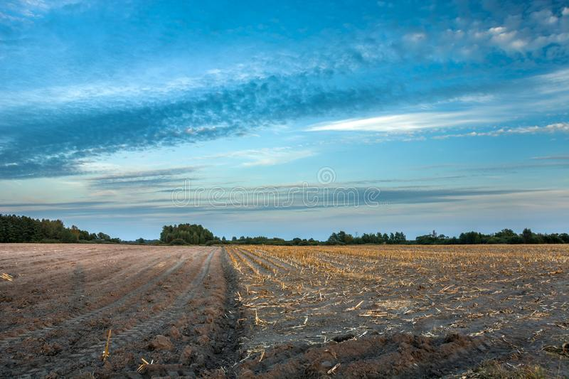 Partly plowed corn field, horizon and clouds on the sky royalty free stock photos