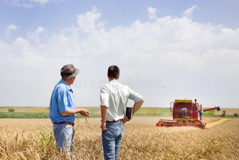 Partnery biznesowi na pszenicznym polu fotografia royalty free