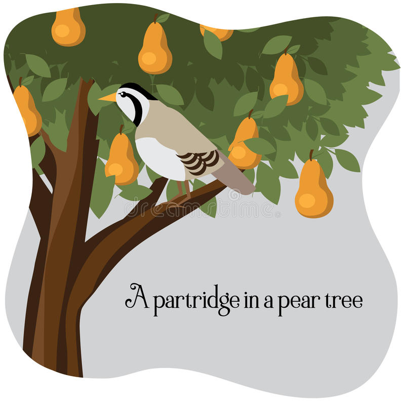 A partridge in a pear tree vector illustration