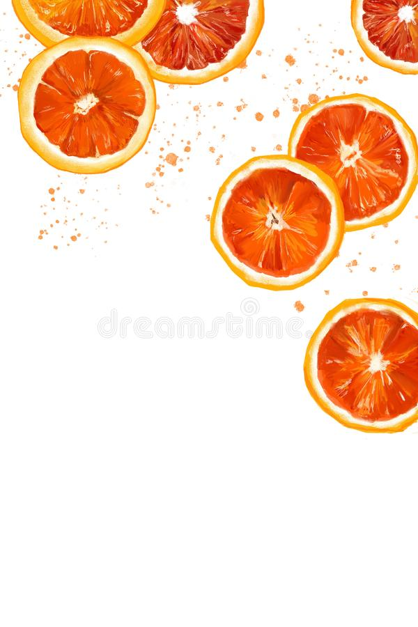 Parts of oranges. Orange slices painted with watercolor royalty free illustration