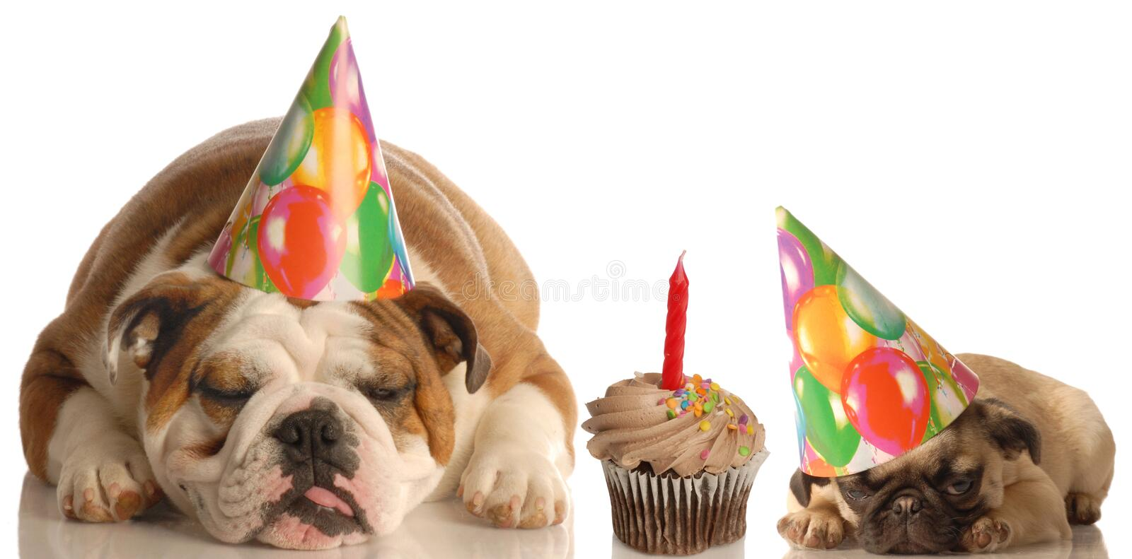 Party Animals Royalty Free Stock Photos
