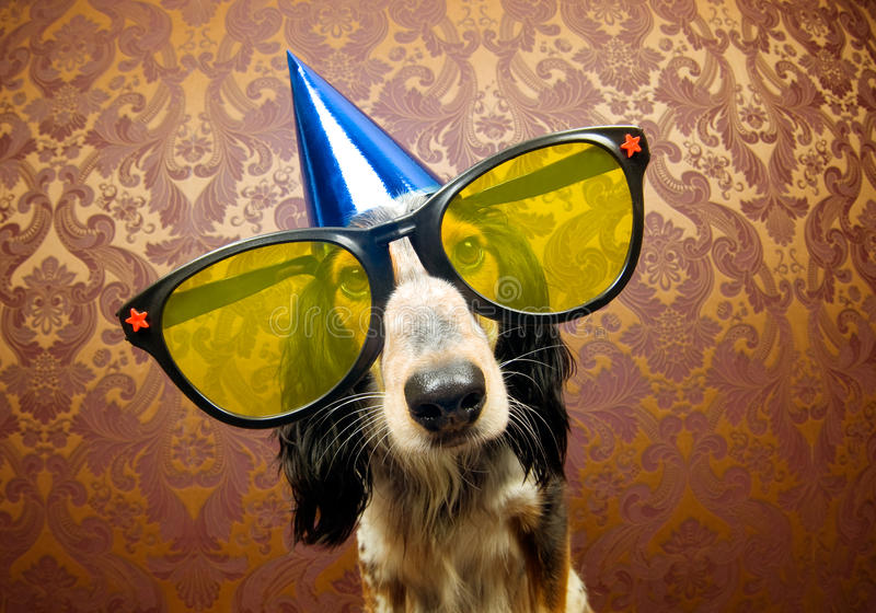 Party dog. Ready for a funky party
