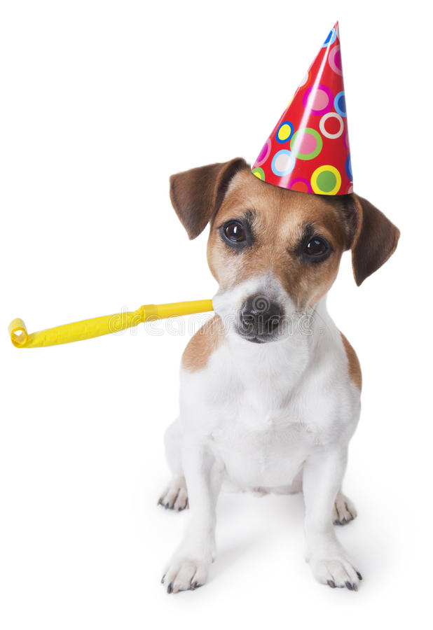 Party dog stock images