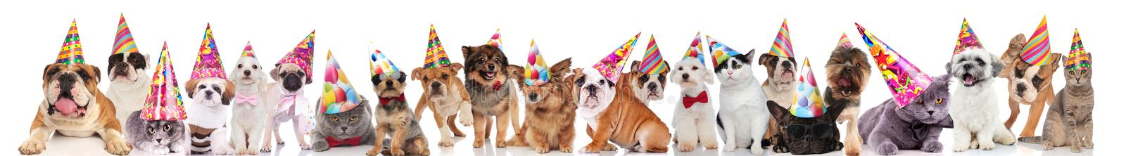 Party dogs and cats with birthday hats on white background. Party dogs and cats with birthday hats standing, sitting and lying on white background stock image