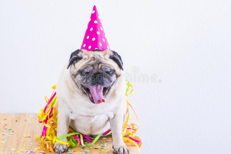 Party and event celebration fun concept with laxy and tired funny pug dog with hat and confetti making yawn and wait to go sleep stock photos