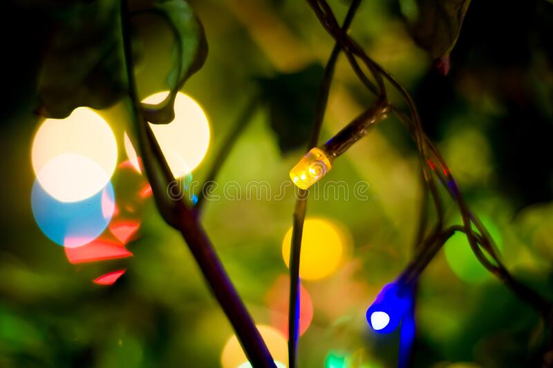 Party lights on a tree , beautiful combination of nature and artificial lights, soft focus.  stock photo
