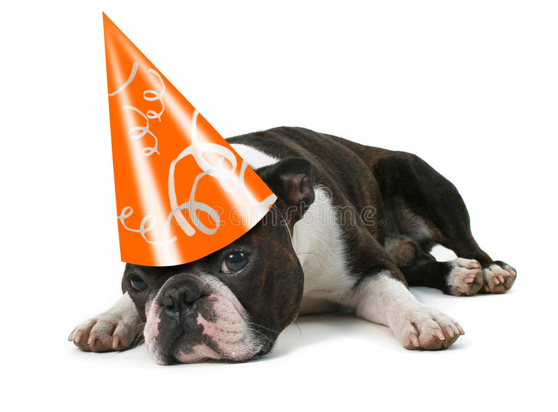 Download Party Pooper Royalty Free Stock Image - Image: 12293376