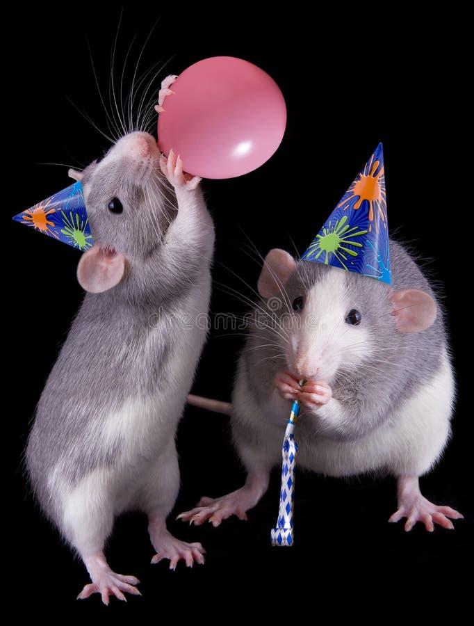 Party Rats stock photos