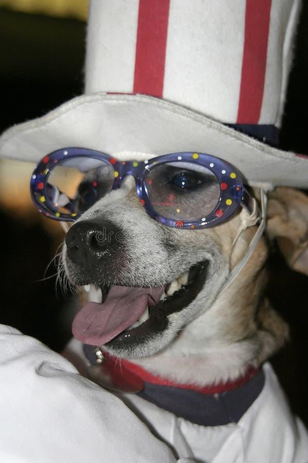 Party-Tier Lizenzfreies Stockbild