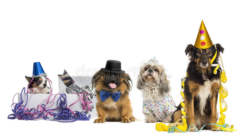 Partying dos cães imagens de stock royalty free