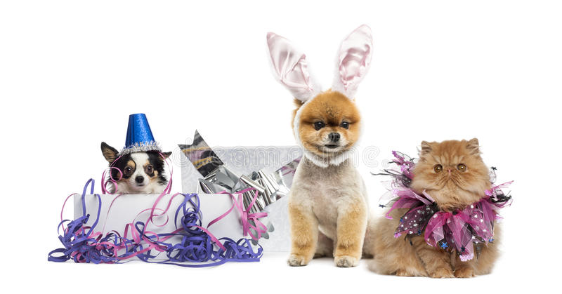 Partying dos cães e gato fotos de stock royalty free
