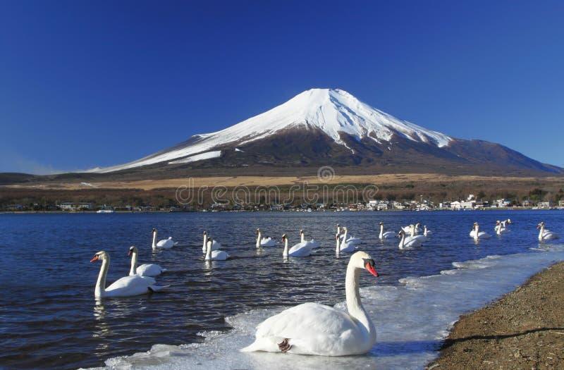 partyjny Fuji frontowy łabędź mt zdjęcia stock