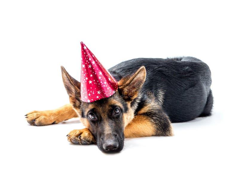 Partyjny pies zdjęcie stock