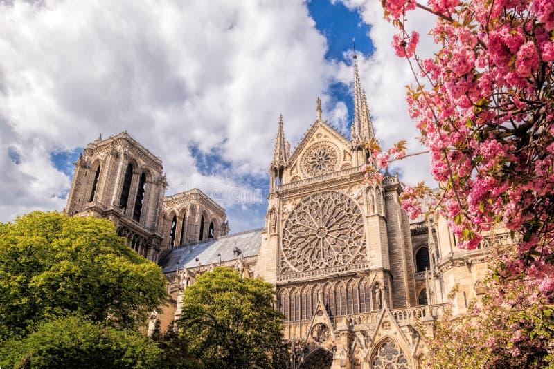 Paryż, Notre Damae katedra z kwitnącym drzewem w Francja zdjęcie stock