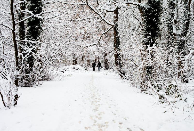 Pary odprowadzenie przez śnieżnych drewien obraz stock