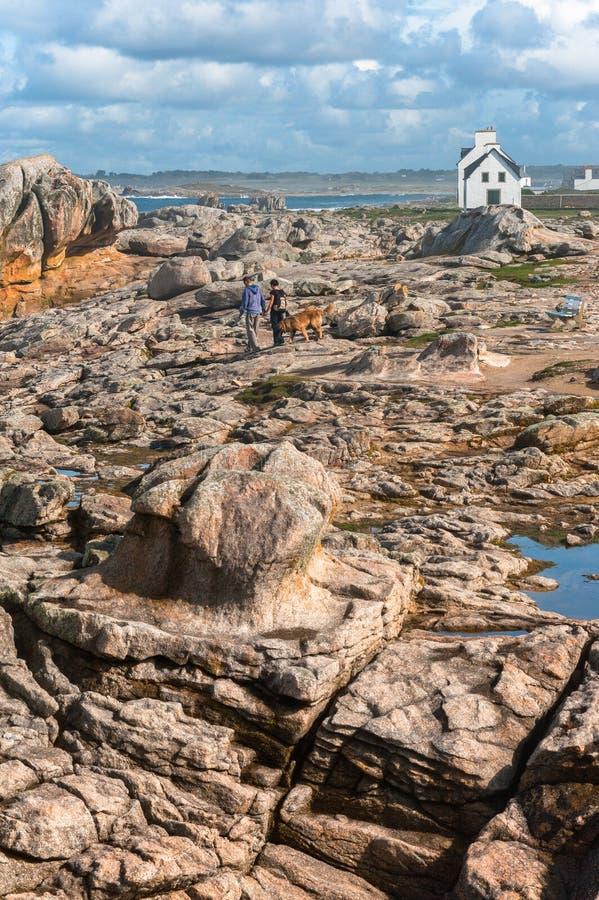 pary psi seashore kamienia odprowadzenie obraz stock