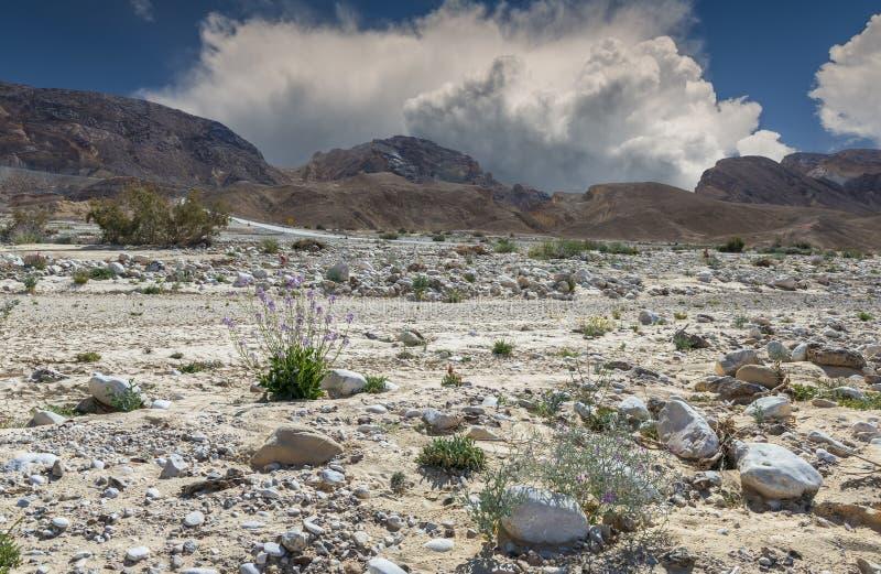 Pas Paran in woestijn van Negev, Israël stock afbeeldingen