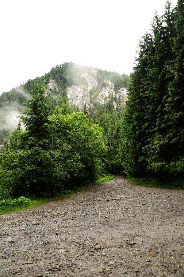 Pas ruchu od drewien iść na górze zdjęcia royalty free