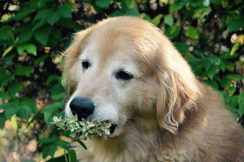 Pas sure pourquoi elle a mis des fleurs dans ma conjecture de bouche pour une bonne photo photo libre de droits