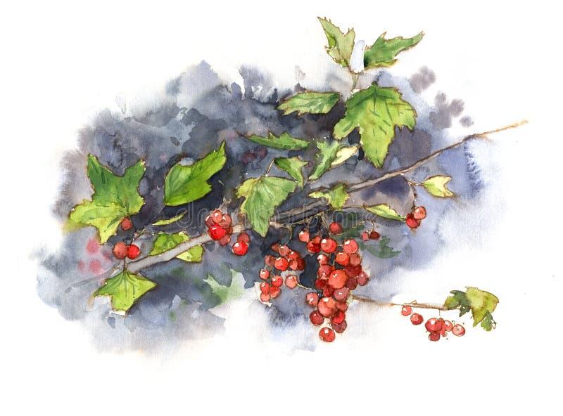Pasa roja del arbusto de la acuarela primer stock de ilustración