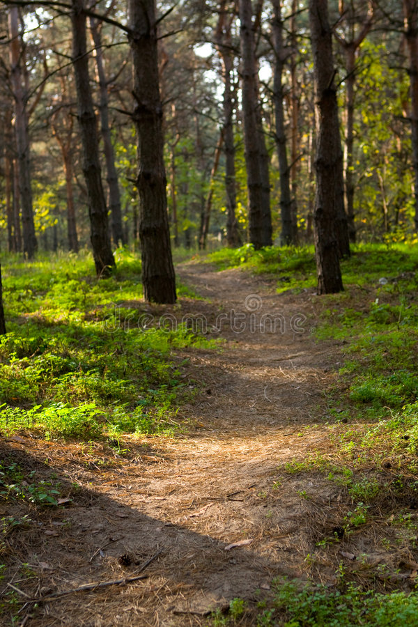pasa ruchu lasowy bieg zdjęcia royalty free