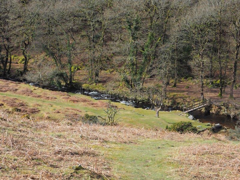 Pasarela de madera en la parte inferior de un valle de árboles a través de una corriente fluído que conecta en cascada sobre roca imagen de archivo libre de regalías