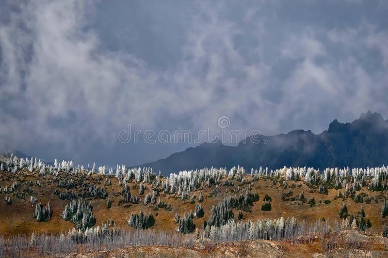 North Cascades National Park scenic landscape. Pasayten Wilderness. Frozen trees on mountain ridge in early winter. Cascade mountains in Pacific Northwest stock photos