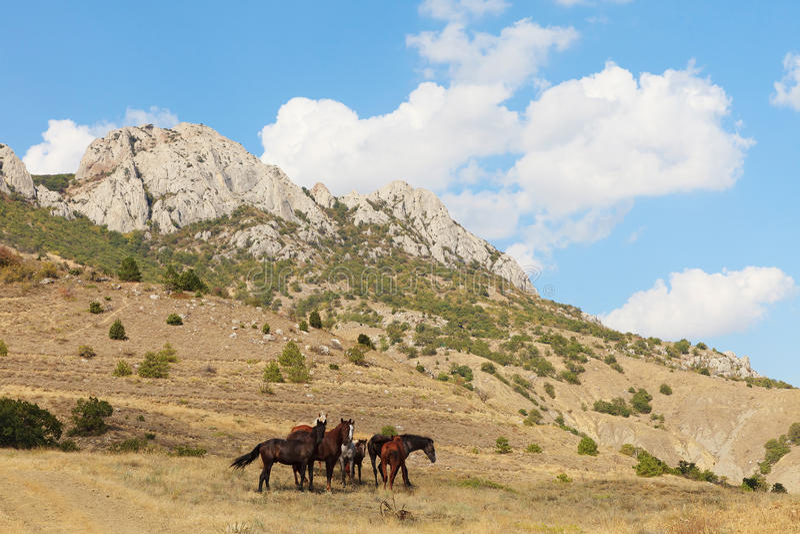 Pasci i cavalli fotografia stock libera da diritti