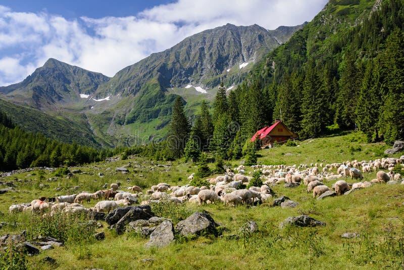 Pascoli alpini immagini stock libere da diritti