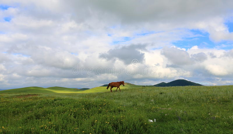 Pascoli in Mongolia Interna Cina immagine stock libera da diritti