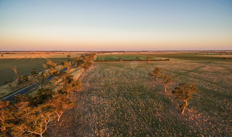 Pascoli verdi con gli alberi sparsi al tramonto - vista aerea bassa fotografie stock libere da diritti
